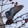 птицам зимой страшен не холод...