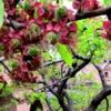 Будущие абрикосики