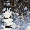 Улыбка леса