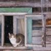 Судьба кота