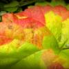 Осенний пэчворк.