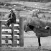 Алтайский  ковбой