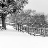 Прогулка по первому снегу