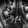 Девять жизней кошки