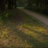 На закате в парке