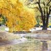 Листопад в парке