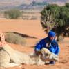 Жители пустыни