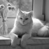 Весенний кот