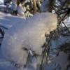 Маленький снежный медвежонок