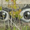 Глаза мастера.