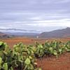 """""""Живая изгородь"""" в горах Марокко."""