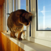 Хочу быть уличным котом
