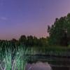 Ночь на болотах