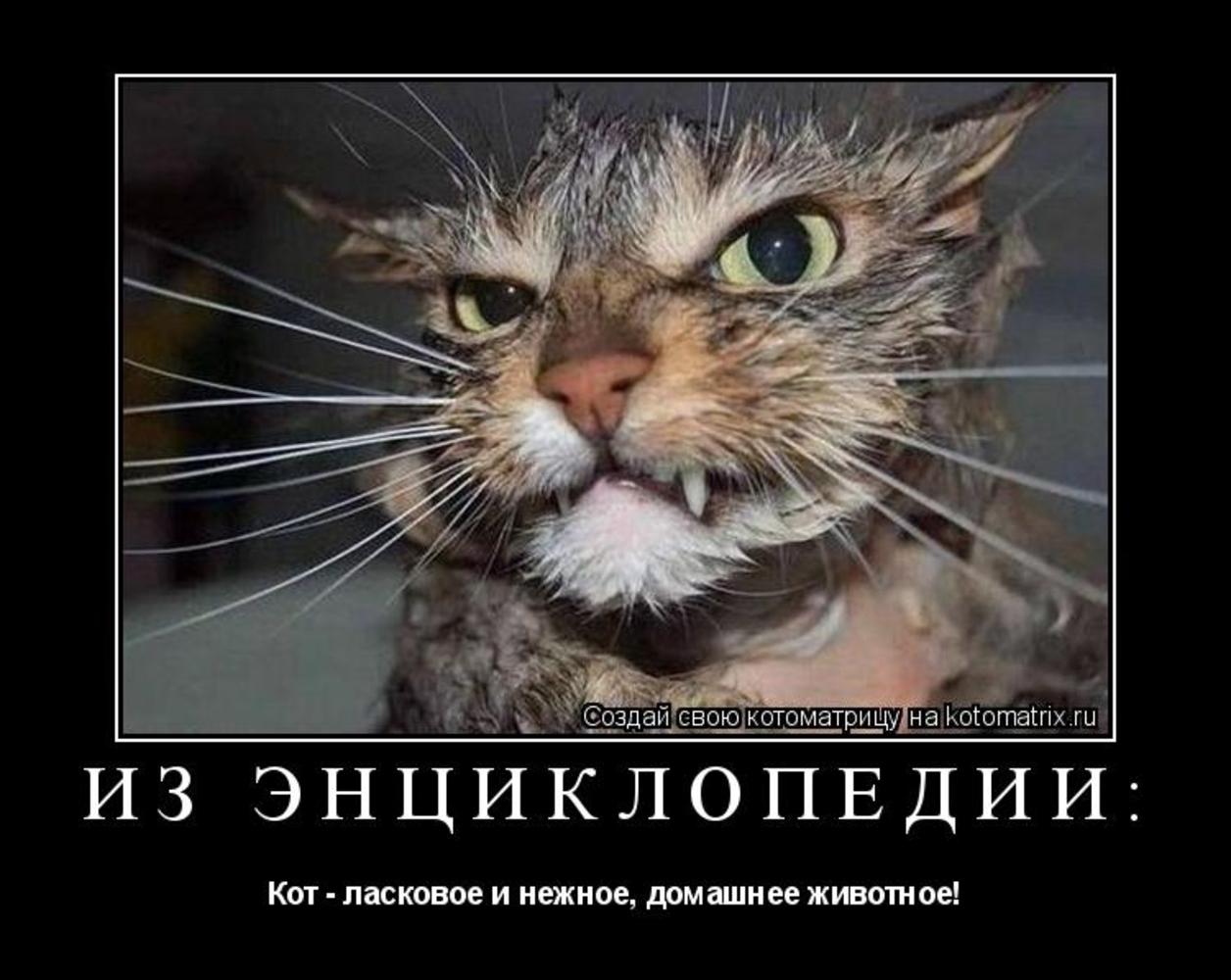 роликом, злые коты демотиватор как будто толще