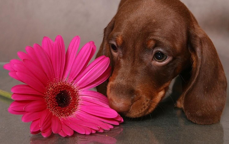 Поздравительная открытка собака