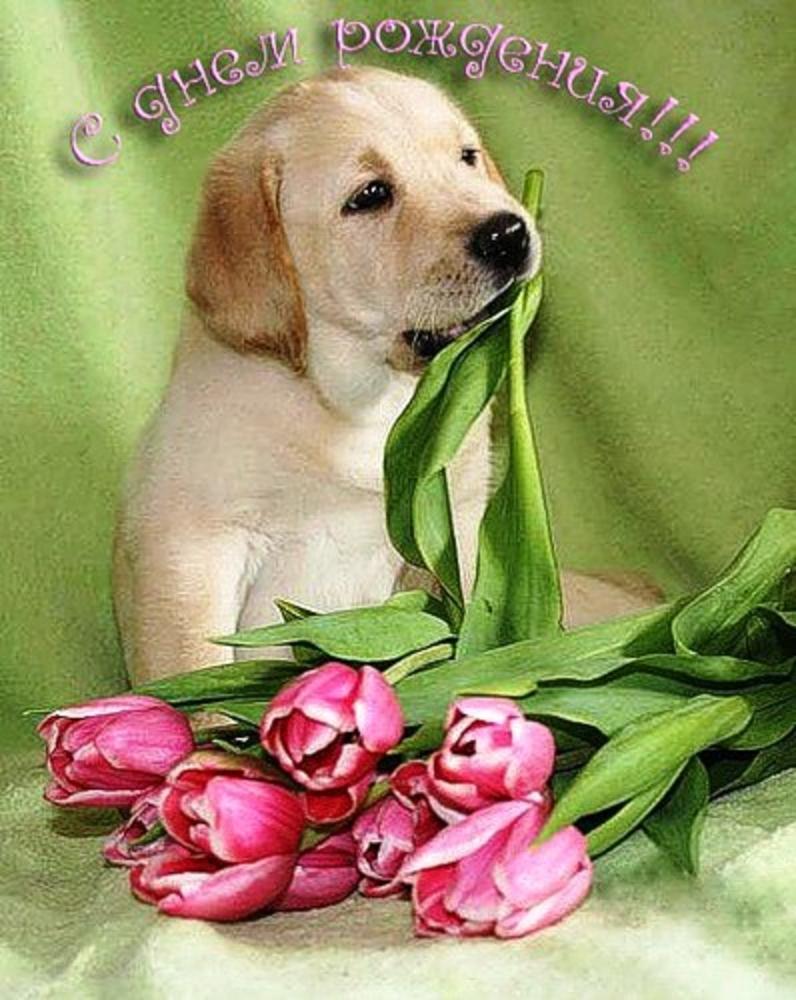 Открытки с днем рождения с собаками