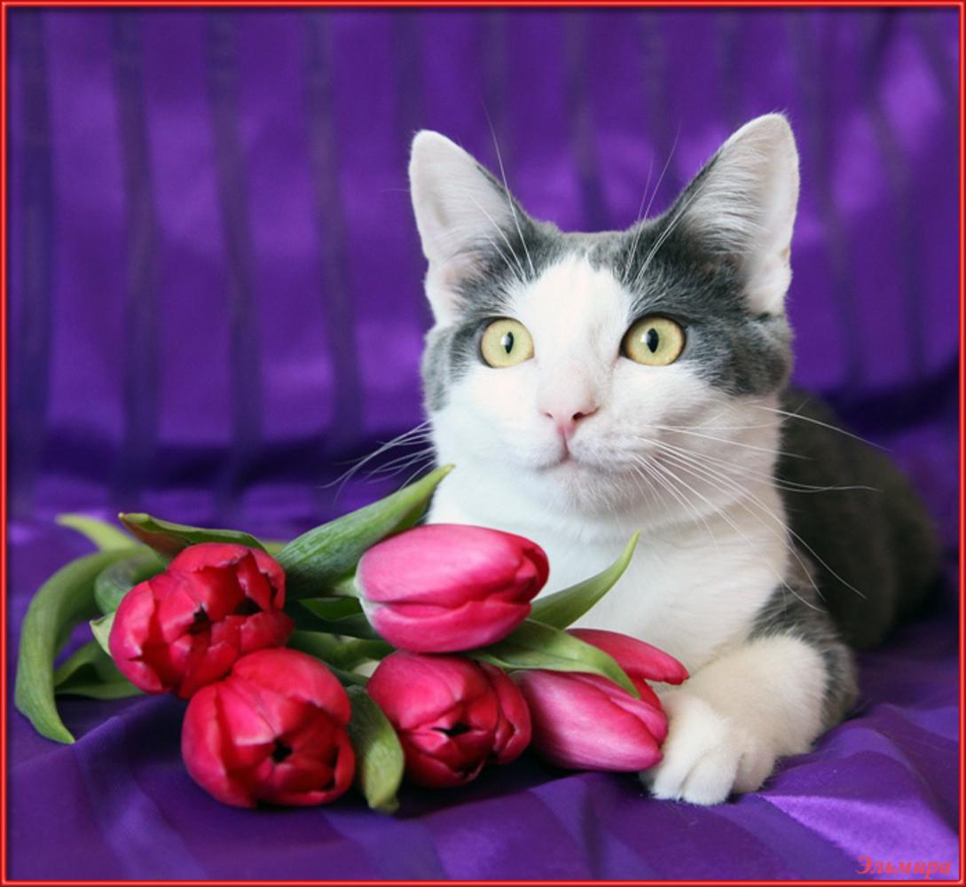 С 8 марта открытка с котами