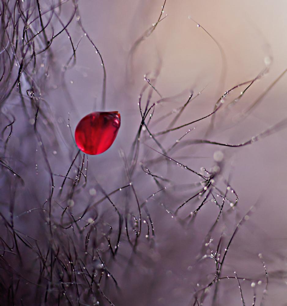 Идеи для фотографии цветов