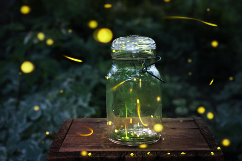 нашем картинки светлячки в банке на траве саженцы
