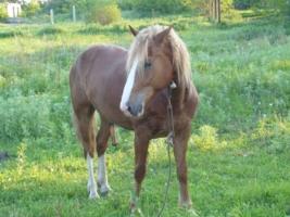 Просто конь!