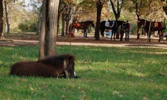 Пони тоже кони :)