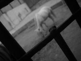 сквозь забор