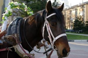 Весенняя лошадка