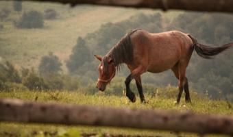 """""""Коней на перевале не меняют."""""""