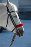 Спит Белогривая лошадка :)