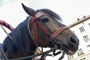 Городская лошадь