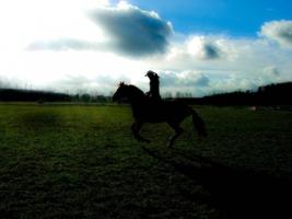 А лошади умеют летать...