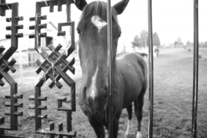 Лошадка за забором....