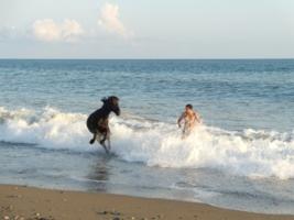 Купание коня.