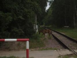 Заблудившаяся лошадка(