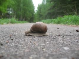 Через дорогу...