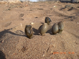 Дткие пески
