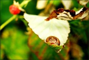 Зелено-розовые малиновые сны