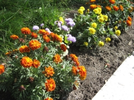 цветы любимому александру лябину