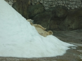 летом,снег для мишки...