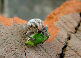 жук с плодом