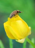 Не жук, а жучишко