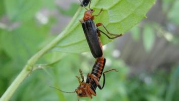 Любовь-жуковь!