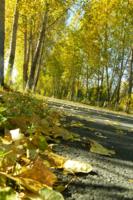 Одиночество осенних дорог
