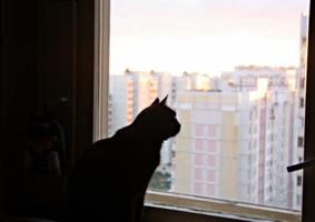 Кошка,которую любил Человек