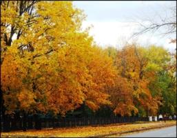 Ранняя осень...