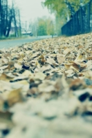 Шорох листопада