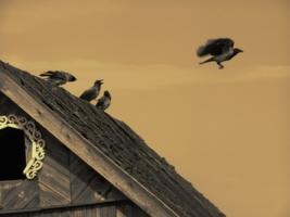 Птицы,как люди.