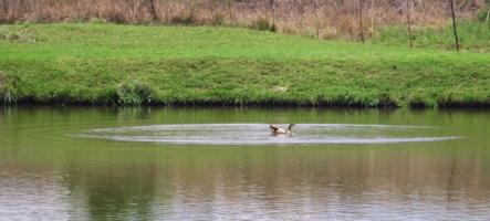 Плывет-плывет по озеру