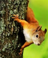 где мои орешки?