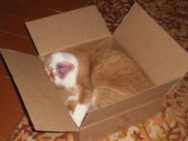 Хороша и прекрасна кошачья жизнь